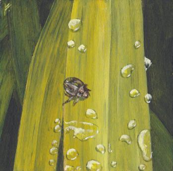 Beetle Grass